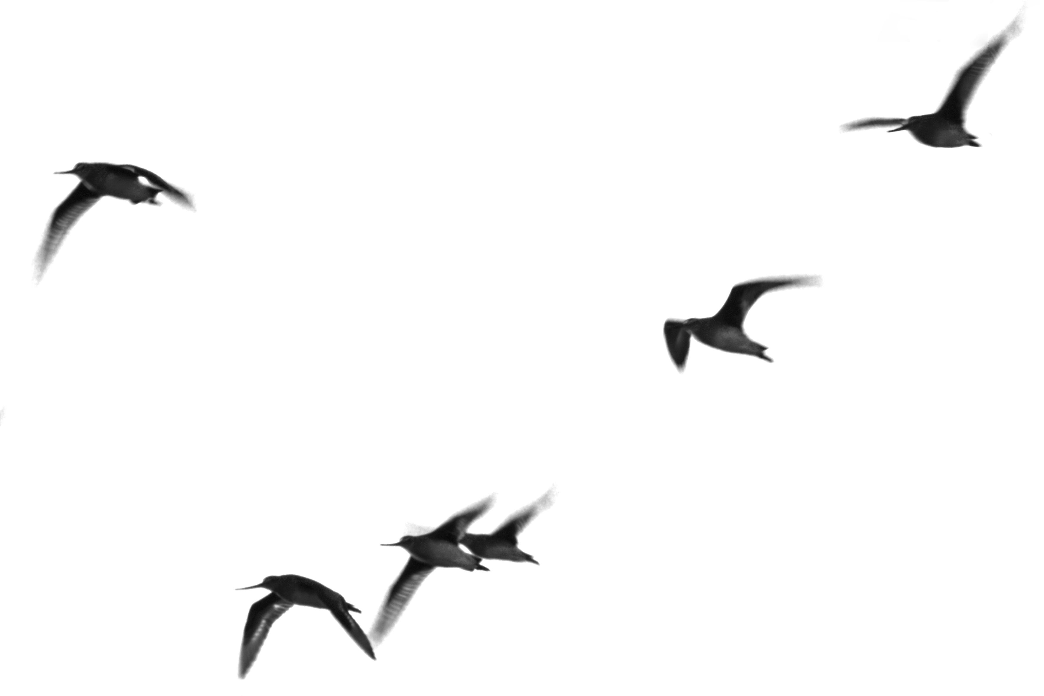 Anchorena pájaros